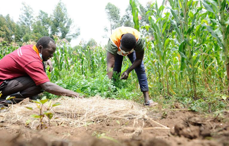 Landwirtschaft in gebückter Haltung