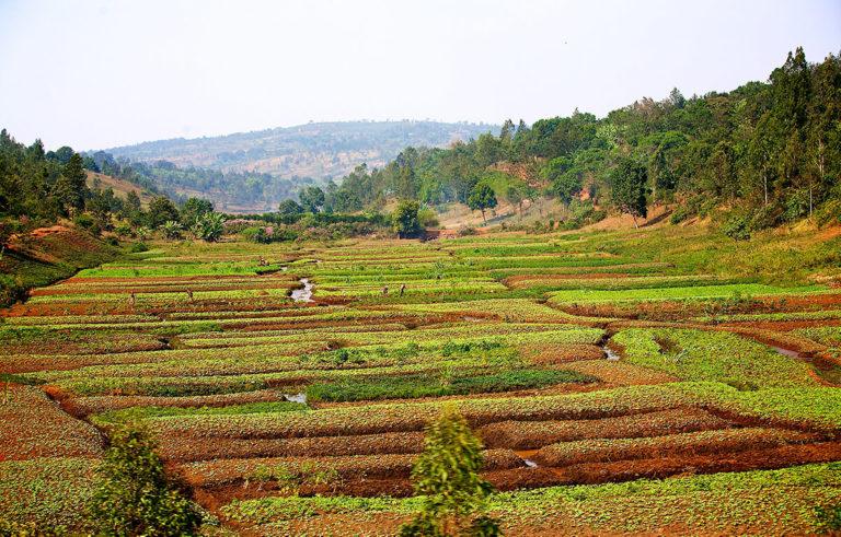 Ackerbau in Burundi